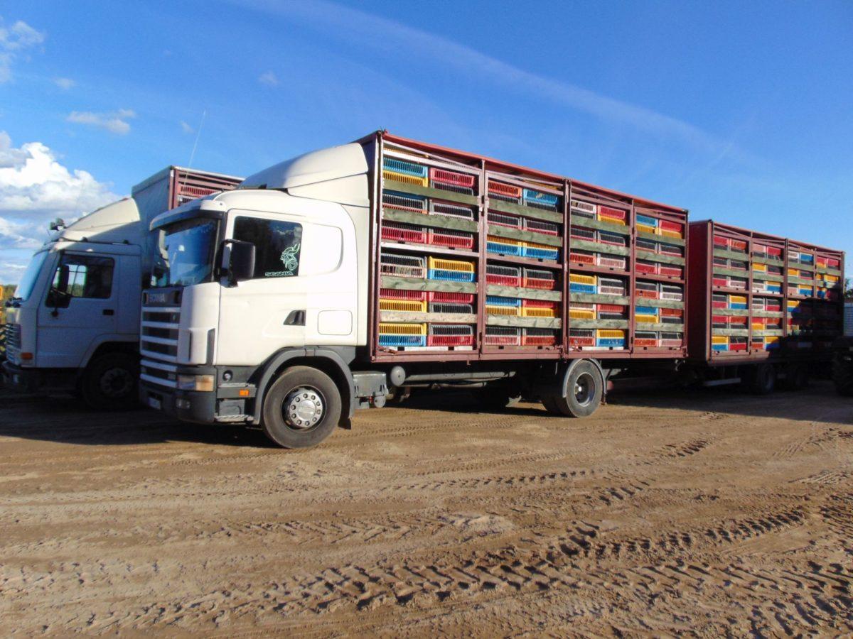 Transport kurczaków KatmirBis roboty ziemne Dobrzyniewo